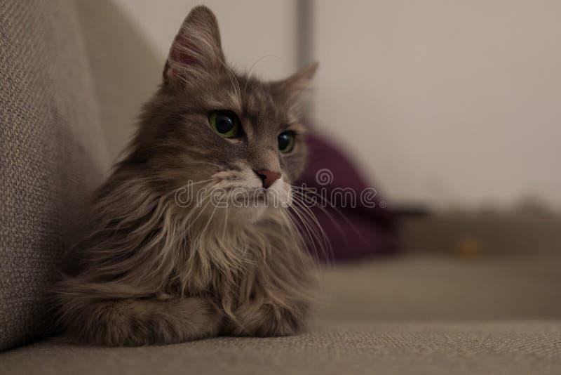 Leuke kat op laag stock afbeelding