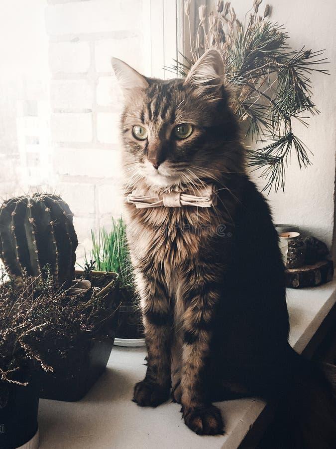 Leuke kat in vlinderdaszitting op venstervensterbank Ruimte voor tekst Swee royalty-vrije stock foto's