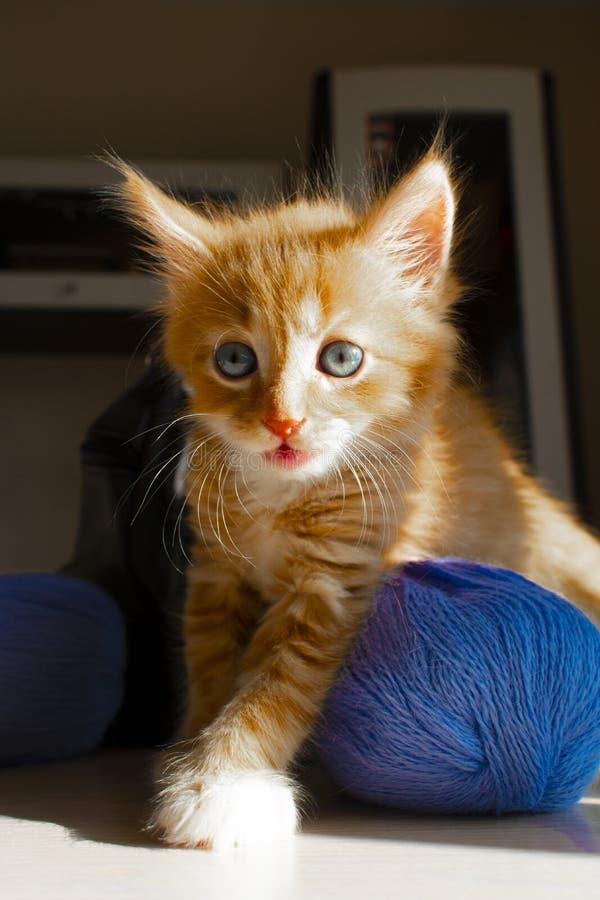 Leuke katje en bal van draad Portret van een leuk rood katje Grappig katje en het breien stock foto