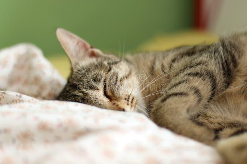 Leuke Katten royalty-vrije stock afbeelding
