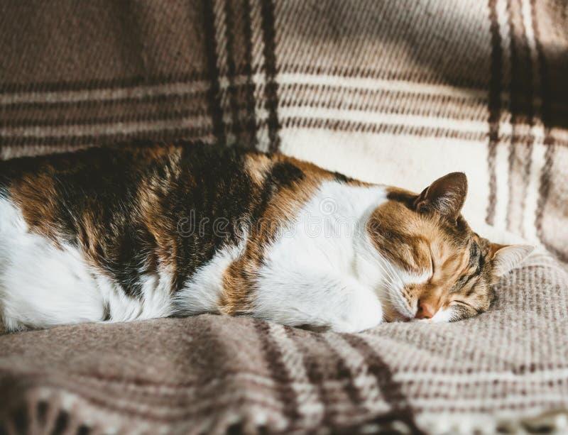 Leuke katten diepe slaap op deken royalty-vrije stock afbeelding