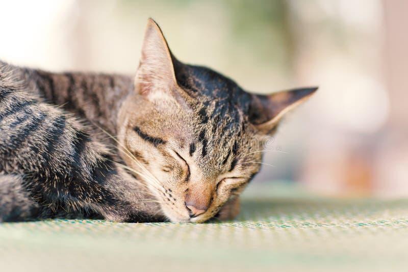Leuke kattenslaap op de mat stock afbeelding