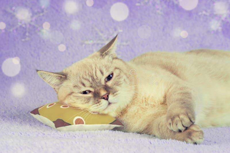 Leuke kattenslaap op een hoofdkussen stock foto
