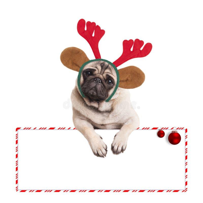 Leuke Kerstmispug puppyhond die rendiergeweitakken dragen en op leeg teken op witte achtergrond hangen stock foto's