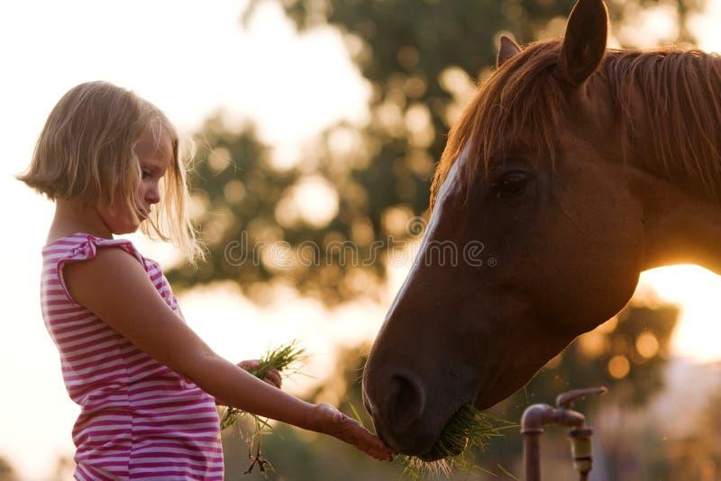 Leuke kindervoeding haar knap paard royalty-vrije stock afbeelding