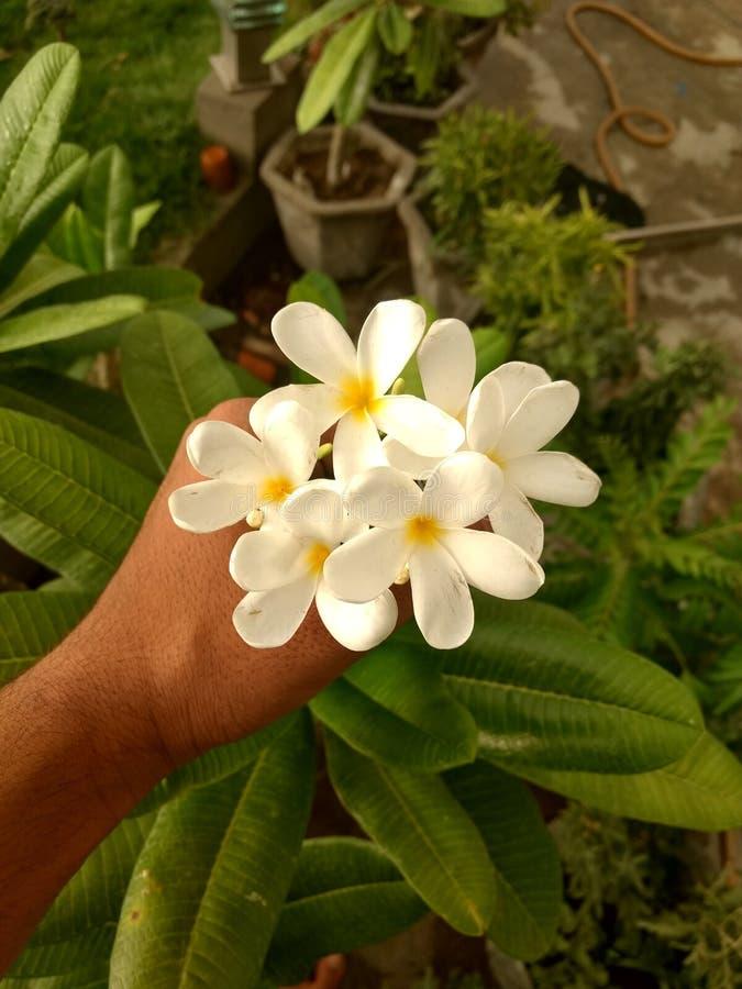 Leuke kleine bloemen in een pot en sommige bladeren royalty-vrije stock afbeeldingen