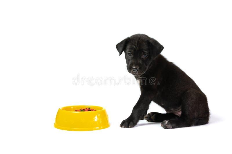 Leuke kleine die hond met kom hondevoer op witte achtergrond wordt geïsoleerd De huisdieren voedt concept stock foto