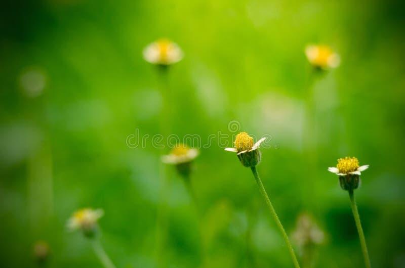 Leuke Kleine Gele Bloemen stock afbeeldingen