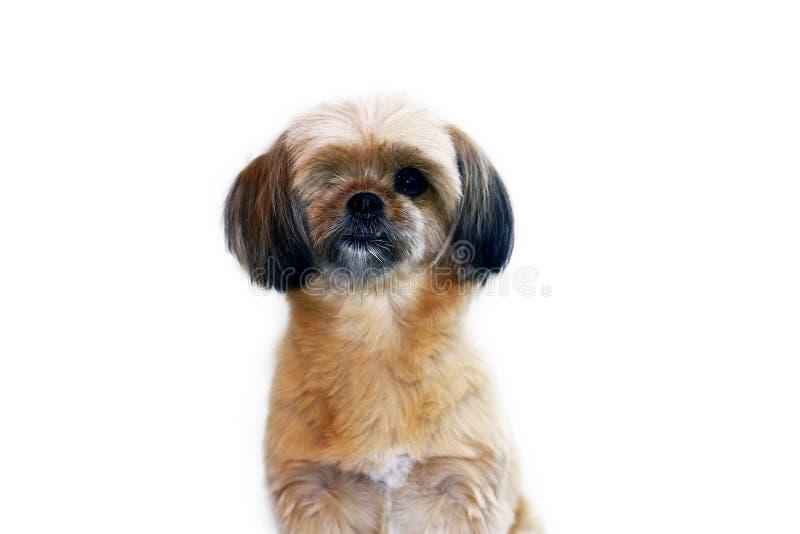 Leuke kleine hond stock foto's