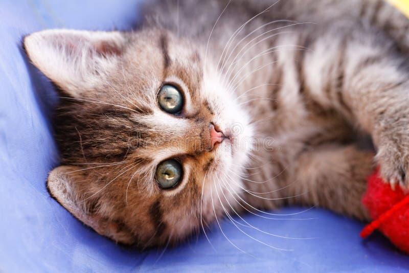 Leuke kleine kat stock afbeeldingen
