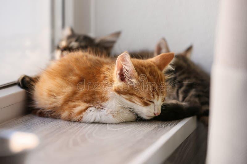 Leuke kleine katjes die dichtbij venster slapen stock afbeeldingen