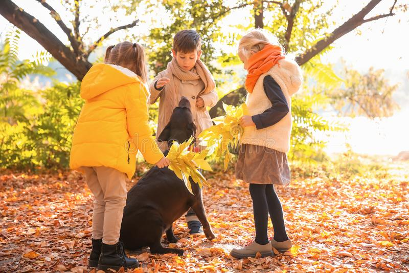 Leuke kleine kinderen met hond in de herfstpark stock foto's