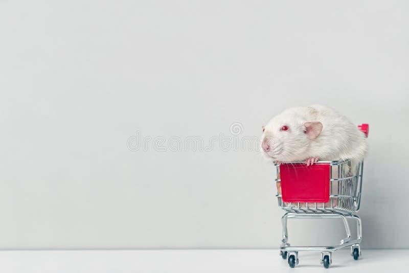 Leuke knaagdierzitting in een rood boodschappenwagentje en zijdelings het kijken royalty-vrije stock foto's
