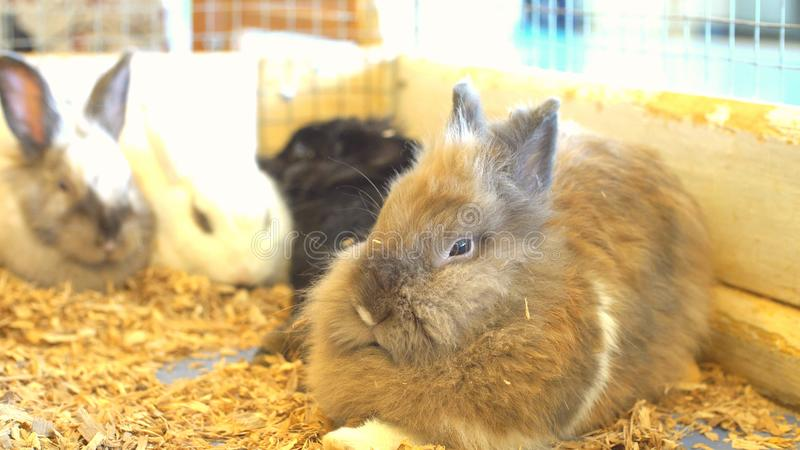 Leuke konijntjeskonijnen bij de dierentuin, pluizige konijntjes stock foto