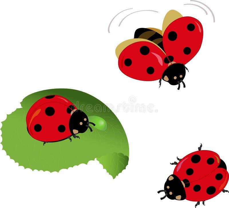 Leuke lieveheersbeestjes stock illustratie