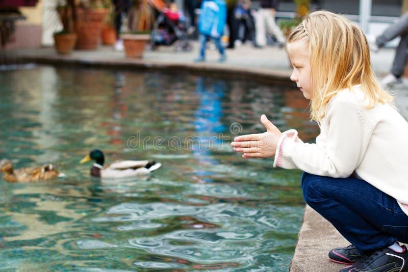 Leuke meisje voedende eenden in de vijver stock foto