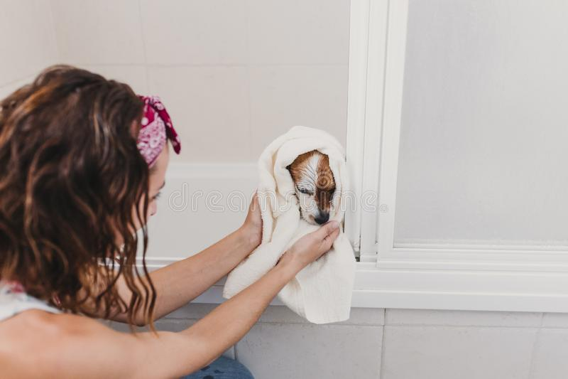Leuke mooie kleine hond nat in badkuip Jonge vrouweneigenaar die haar krijgen thuis schone hond Witte achtergrond royalty-vrije stock afbeeldingen