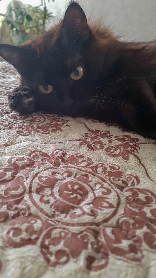 Leuke mooie zwarte kat en het ornament royalty-vrije stock foto's