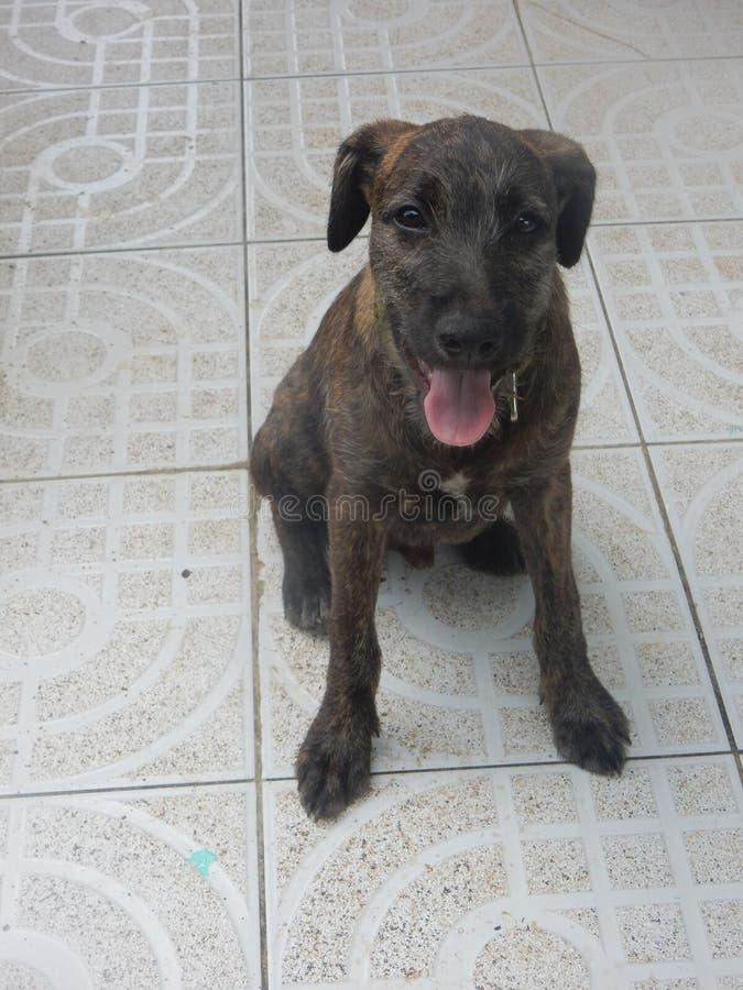 Leuke nieuwsgierige bruine puppyzitting stock afbeelding
