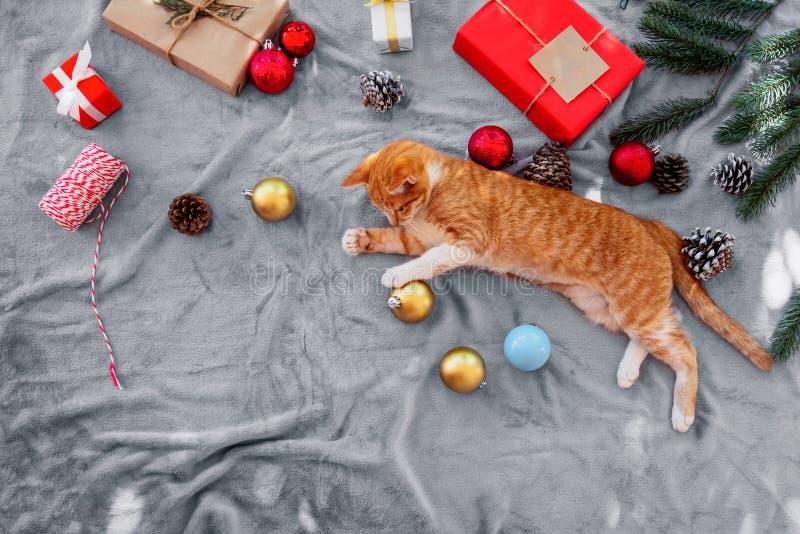 Leuke oranje katjeszitting op grijs tapijt in Kerstmisvakantie met decoratie en ornament stock foto's