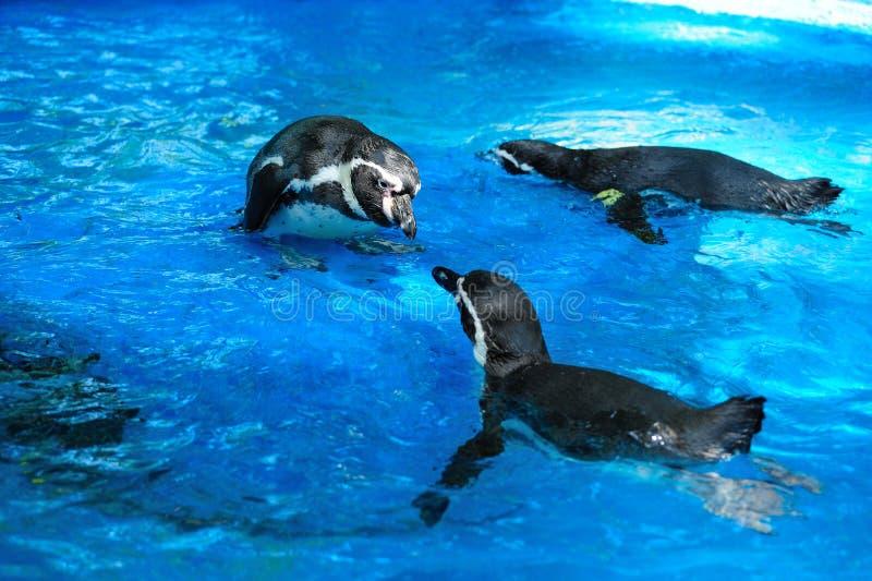 Leuke pinguïn royalty-vrije stock fotografie