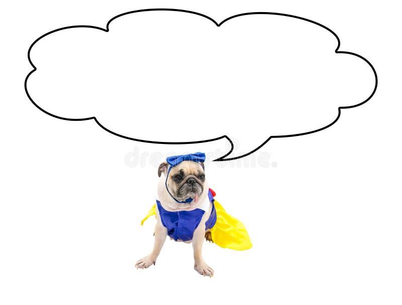 Leuke Pug Hond met de lege wolkenbel boven haar die hoofd, op wit met kostuum met het Knippen van weg op Hond wordt geïsoleerd royalty-vrije stock afbeelding