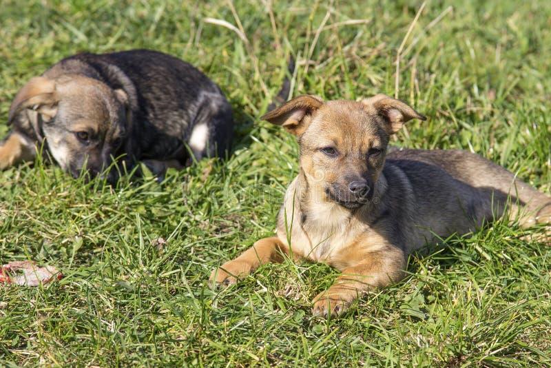 Leuke puppy stock foto's