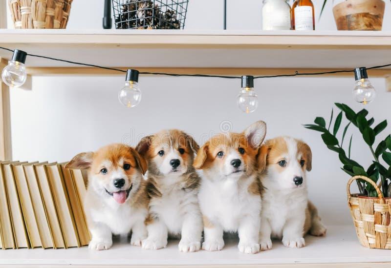 Leuke puppy op een houten plank royalty-vrije stock afbeelding