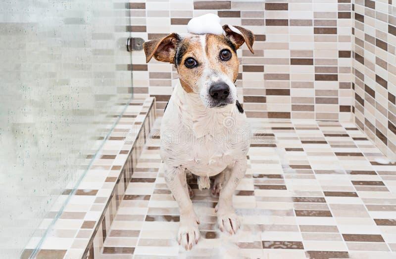Leuke puppyhond met schuim op hoofd in douche stock foto