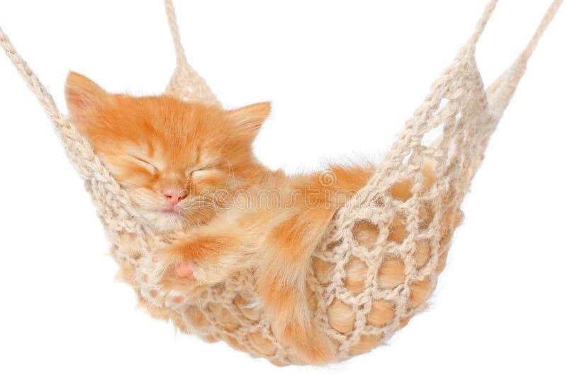 Leuke rode haired katjesslaap in hangmat royalty-vrije stock afbeelding