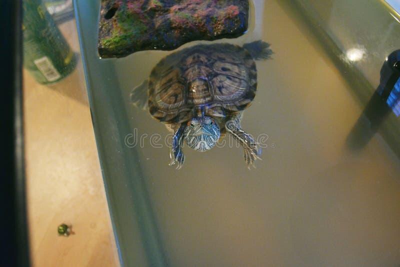Leuke schildpad stock foto's