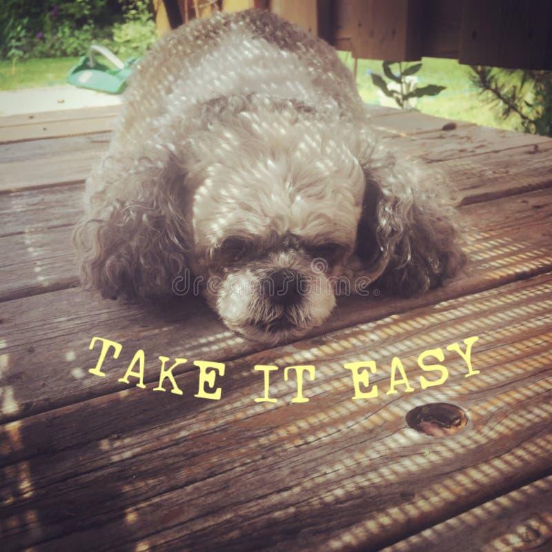 Leuke slaperige hond en gele tekst Neem gemakkelijk het stock foto