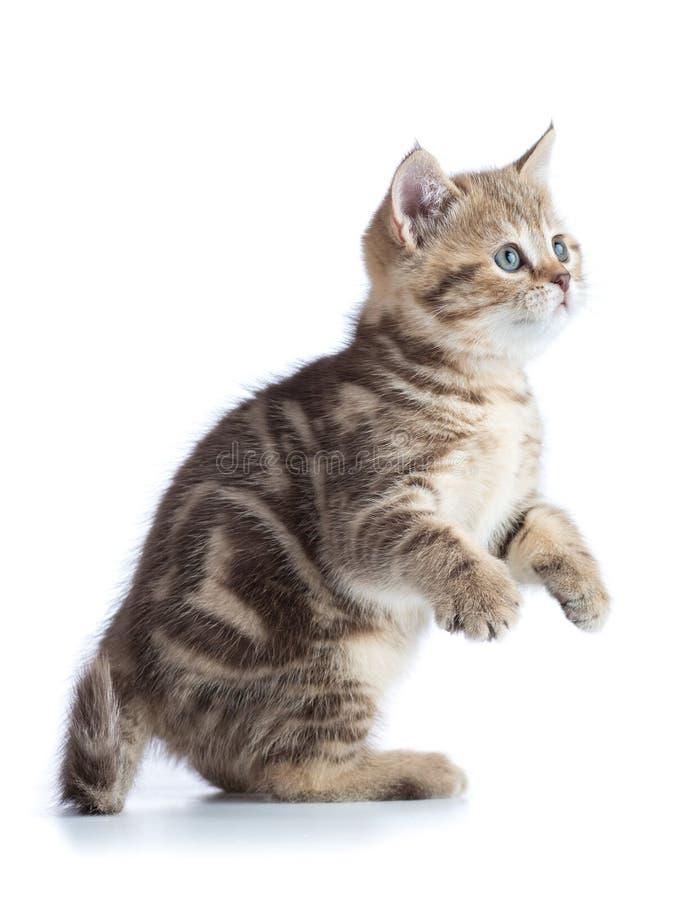 Leuke speelse kat op wit royalty-vrije stock afbeeldingen