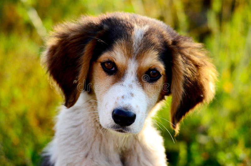 Leuke verdwaalde hond stock afbeeldingen