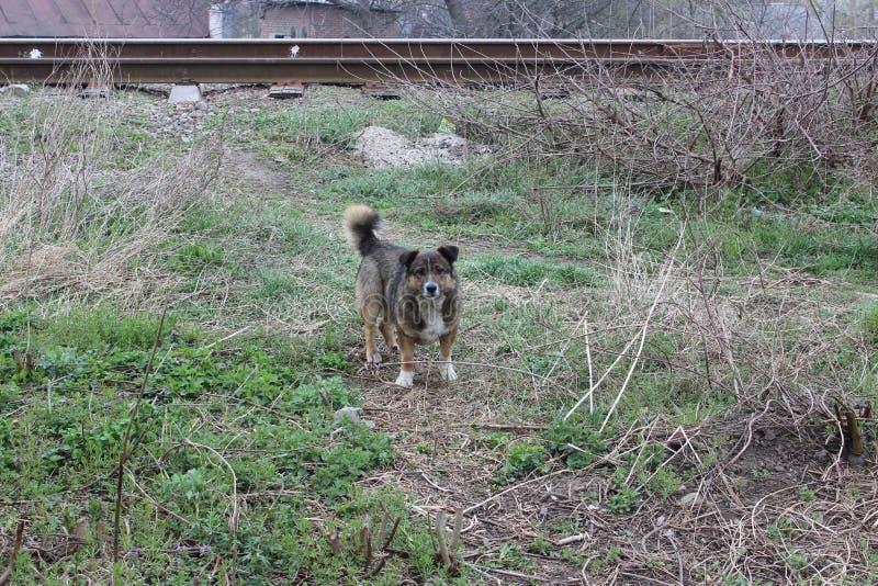 Leuke verdwaalde hond stock foto's