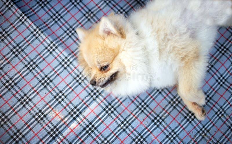 Leuke verdwaalde hond op plastic mat zand stock foto