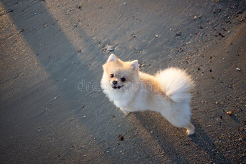 Leuke verdwaalde hond op zand stock fotografie