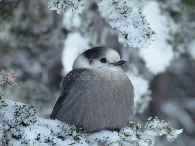 Leuke vogel op een tak royalty-vrije stock afbeeldingen