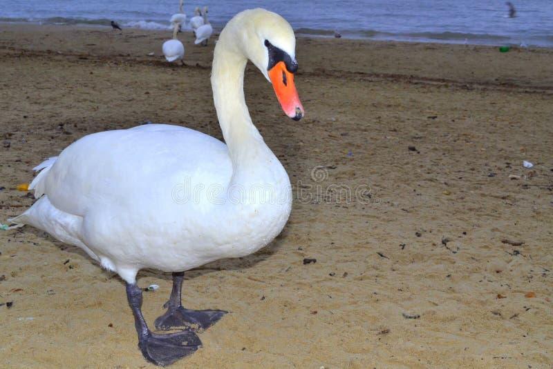 Leuke vogelclose-up royalty-vrije stock fotografie