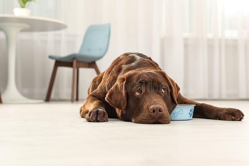 Leuke vriendschappelijke hond die dichtbij het voeden van kom op vloer liggen stock foto