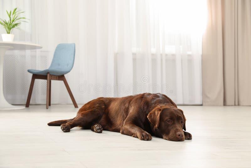 Leuke vriendschappelijke hond die op vloer liggen stock foto's