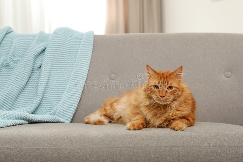 Leuke vriendschappelijke kat die camera op bank bekijken royalty-vrije stock foto