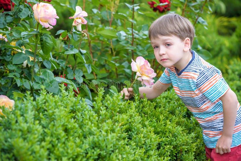 Leuke weinig jongen het water geven installaties met gieter in de tuin Activiteiten met kinderen in openlucht stock afbeelding