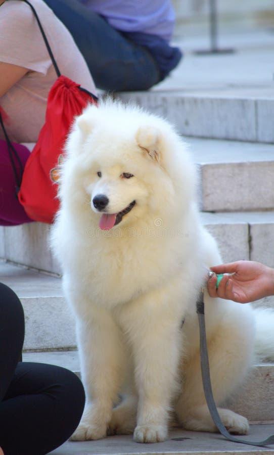 Leuke witte hond royalty-vrije stock fotografie