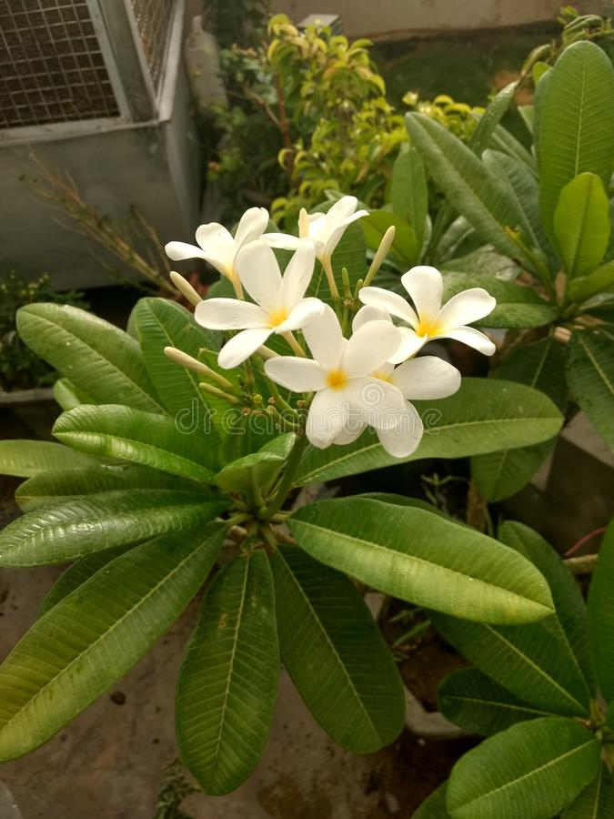 Leuke witte kleine bloemen met achtergrondtuin stock afbeeldingen