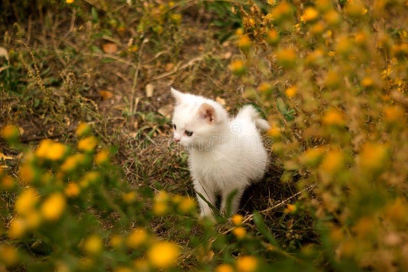 Leuke witte richels in een de zomerweide en rust in het groene gras stock foto's