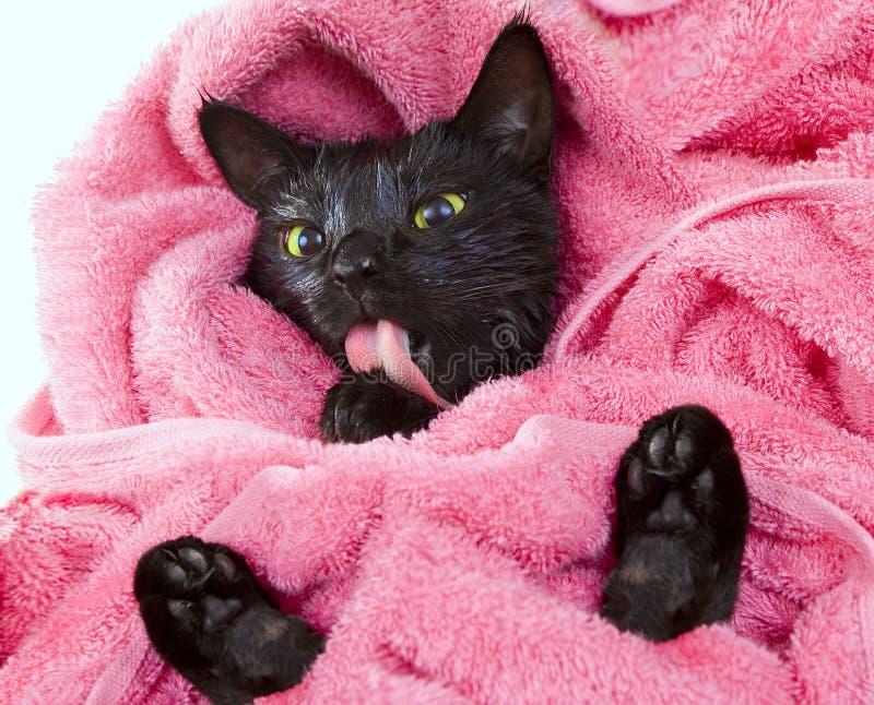 Leuke zwarte doorweekte kat die na een grappig bad likken weinig demon stock foto afbeelding - Foto in een bad ...