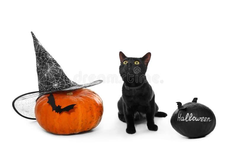 Leuke zwarte kat en Halloween-pompoenen op witte achtergrond royalty-vrije stock afbeelding