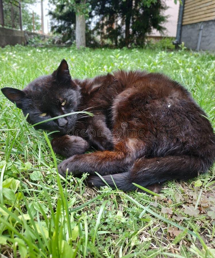 Leuke zwarte kat Klaar voor wat pret stock afbeeldingen