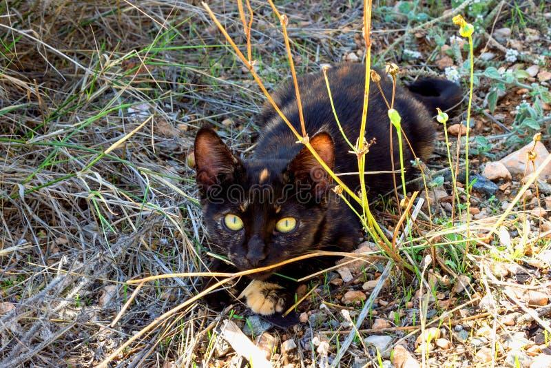 Leuke zwarte katjeszitting in het gras stock afbeeldingen